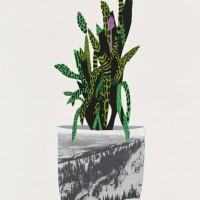 Jonas Wood Artist Art Plant Print