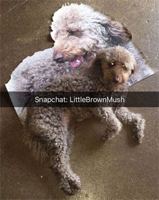 Alec Soth Snapchat Littlebrownmush