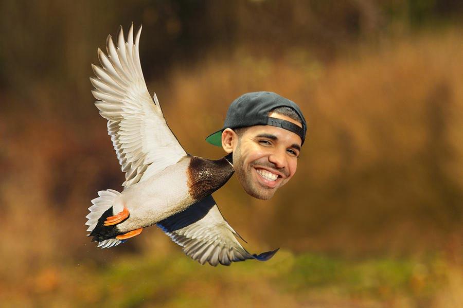 Drake Rapper Duck Meme Funny